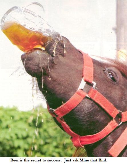 horse racing cartoon. drinking horse
